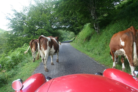 There was virtually no traffic on the D441 over the Col de Houratate but you did have to watch out for the mobile bovine chicanes.